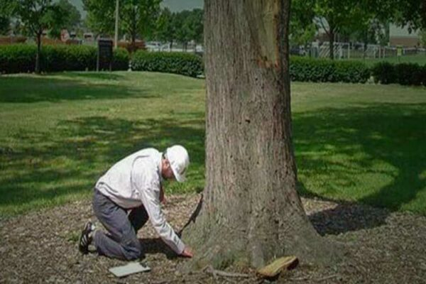 Photo of Arborist Evaluating the Health of a Tree