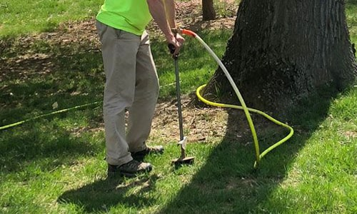 Rick's Plant Health Care Deep Root Feeding Tree Care