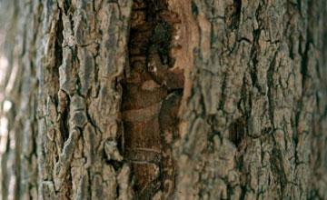 Photo of Vertical Split in Tree Bark