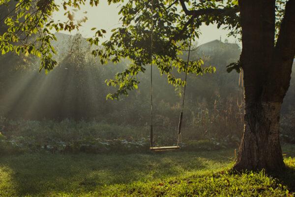 tree swing in the yard
