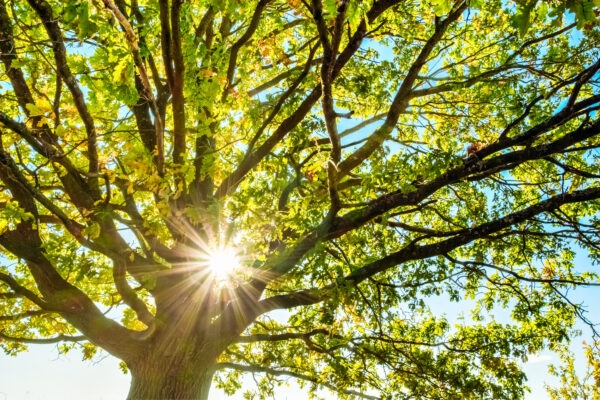 How Much Does a Tree Inspection Cost?
