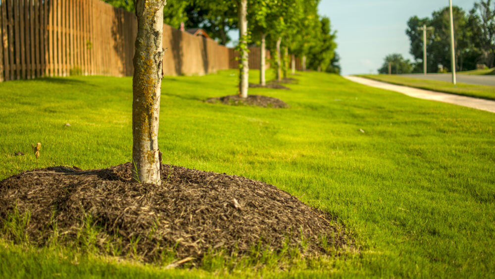 Landscaped Trees with Mulch