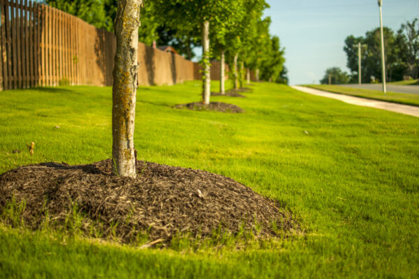 What is Root Collar Excavation?