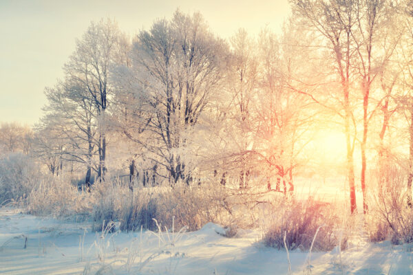 5 Tips to Prepare Your Trees for Winter
