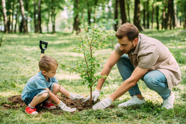 5 Things to Look Out for When Planting Trees